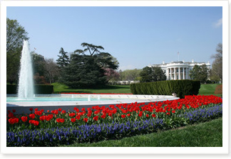 The White House and Gardens